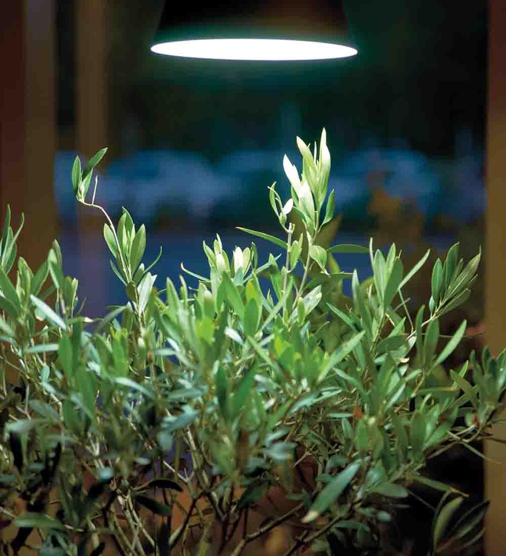 växtlampa från Nelson Garden